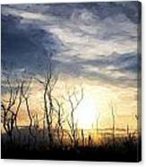Cezanne Style Digital Painting Stark Bush Silhouette Against Stunning Sunset Sky Canvas Print