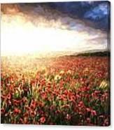 Cezanne Style Digital Painting Stunning Poppy Field Landscape Under Summer Sunset Sky Canvas Print