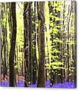 Cezanne Style Digital Painting Vibrant Bluebell Forest Landscape Canvas Print