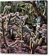 Chainfruit Cholla Canvas Print