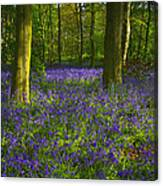 Chalet Wood Wanstead Park Bluebells Canvas Print