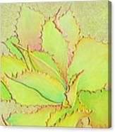 Chantilly Lace Canvas Print