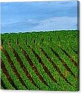 Chardonnay Sky 17990 Canvas Print