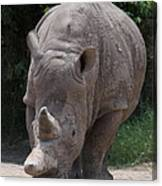 Waco Texas Rhinoceros Canvas Print