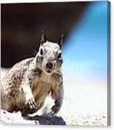 Charging Ground Squirrel Canvas Print