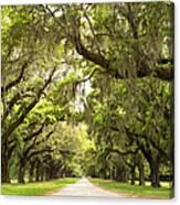 Charleston Avenue Of Oaks Canvas Print