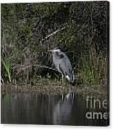 Charleston Birds Canvas Print