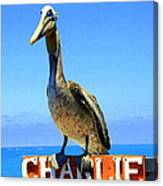 Charlie The Pelican Canvas Print