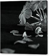 Charm Is Deceptive... Beauty Fleeting Canvas Print