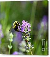 Chasing Nectar Canvas Print