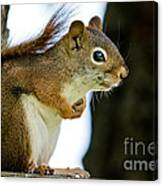 Chatty Squirrel Canvas Print