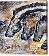 Chauvet Cave Auroch And Horses Canvas Print