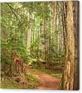 Cheakamus Lake Path Canvas Print