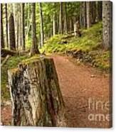 Cheakamus Lake Trail Canvas Print