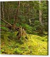 Cheakamus Rainforest Floor Canvas Print