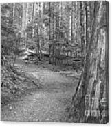 Cheakamus Trail In Black And White Canvas Print