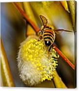 Check Out My Beehind Canvas Print