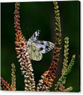 Checkered White On An Indigo Canvas Print