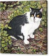 Checkers The Cat Canvas Print