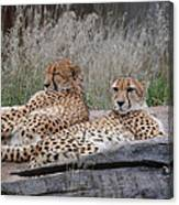 Chee-laxing Canvas Print