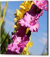 Cheerful Gladiolus Canvas Print