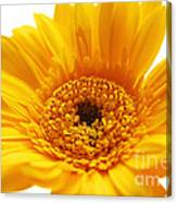 Cheerful Yellow Canvas Print