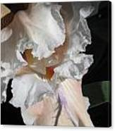 Cheesecake Iris Canvas Print