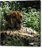 Cheetah 2 Canvas Print