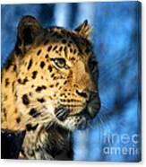 Cheetah Acinonyx Jubatus Canvas Print