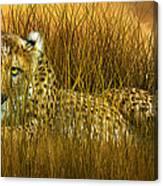 Cheetah - In The Wild Grass Canvas Print