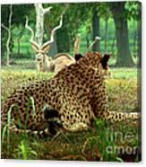 Cheetah Lunch-87 Canvas Print