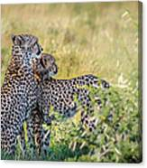 Cheetah Mother And Son Canvas Print