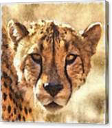 Cheetah One Canvas Print