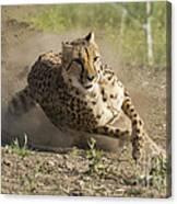 Cheetah Run 2 Canvas Print