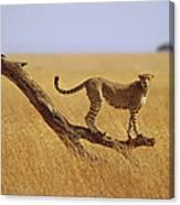 Cheetah Standing On Dead Tree Canvas Print