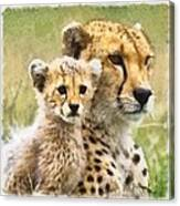 Cheetah Two Canvas Print