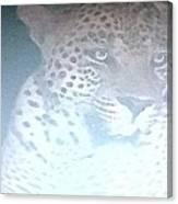 Cheetah Visits The Camp At Night Canvas Print