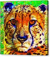 Face Of The Cheetah Canvas Print