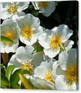 Cherokee Rose 2011 Canvas Print