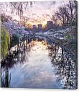 Cherry Blossom Lagoon Canvas Print