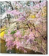 Cherry Blossom Land Canvas Print