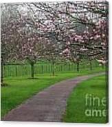 Cherry Blossom Path Canvas Print