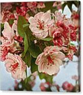 Cherry Blossom Pink Canvas Print