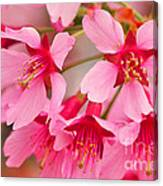 Cherry Blossom Special Canvas Print