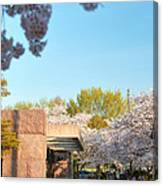 Cherry Blossoms 2013 - 021 Canvas Print