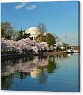 Cherry Blossoms 2013 - 041 Canvas Print