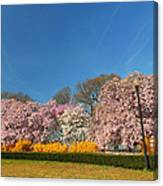 Cherry Blossoms 2013 - 052 Canvas Print