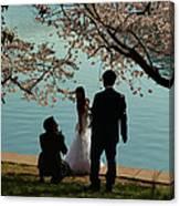 Cherry Blossoms 2013 - 054 Canvas Print