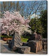 Cherry Blossoms 2013 - 058 Canvas Print