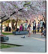 Cherry Blossoms 2013 - 069 Canvas Print